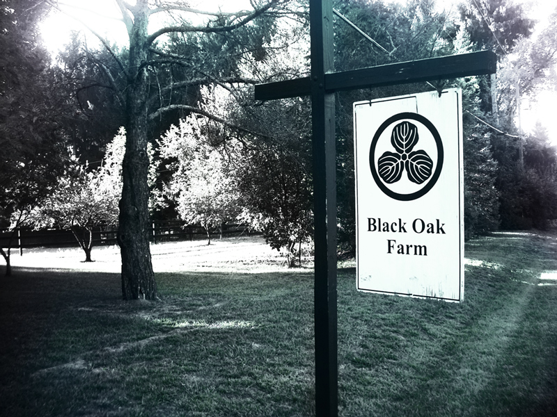 blackoak_farm1